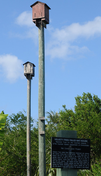 The bat houses at the Queen Elizabeth Botanic Gardens.  Each house can hold about 200 bats!