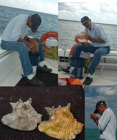 One of the Capt. Marvin's crew spent the ride back cleaning Conch shells.  Earlier in the trip we got to grab 10 off the bottom at our first stop.  During the next two stops, they cleaned/ cut the conch.  During th elunch stop, we ate them.  They are hard to see on the sea floor because they are so dirty.  I guess I didn't realize how much work went into cleaning them.  Afterwards, it was time for a smoke.