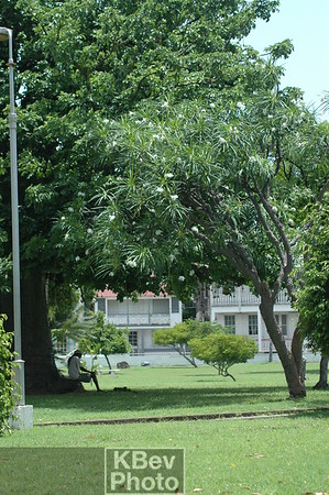 I caught this photo of a man under a tree in Independence Square.  Too bad I didn't crop out the light pole.