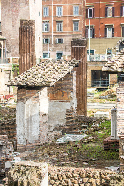 Rome Cat Ruins-3033