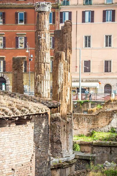 Rome Cat Ruins-3034