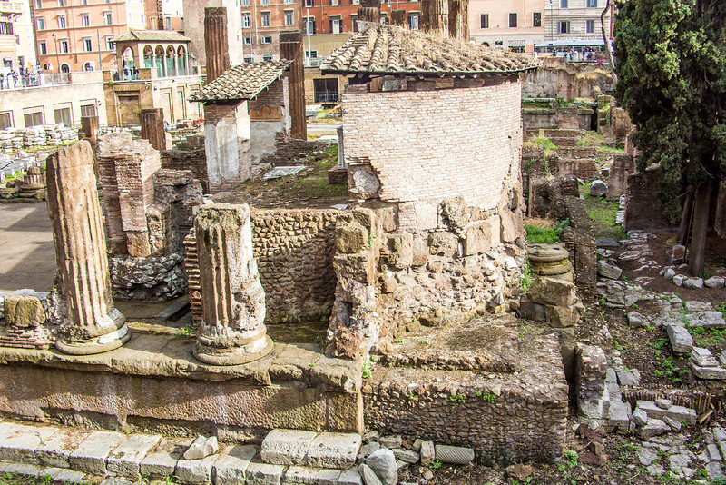 Rome Cat Ruins-3031