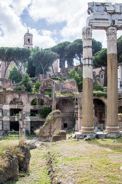 Rome - Forum-3386