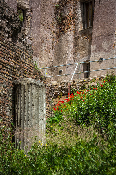Rome-Forum-3707