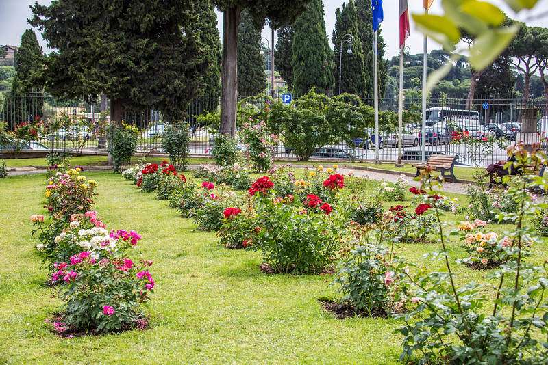 Rome - Rose Garden-4397