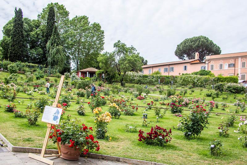 Rome - Rose Garden-4426