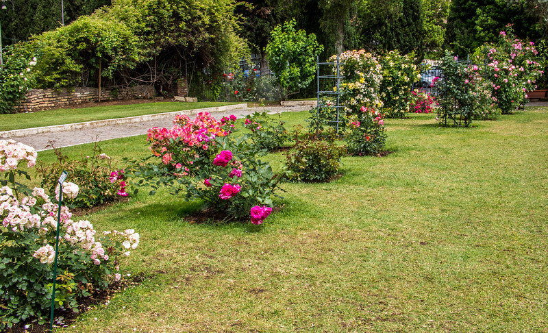 Rome - Rose Garden-4413