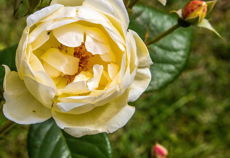 Rome - Rose Garden-4404