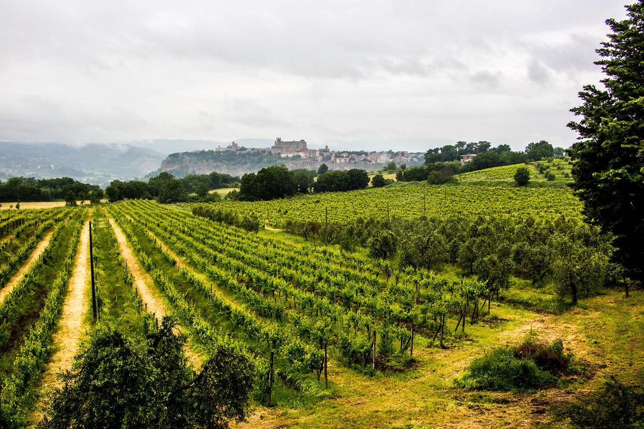 Unbria - Wine Tasting-2885