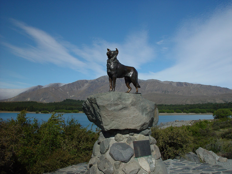 Sheep dog memorial, Tekapo