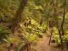 Kepler Track, Fiordland