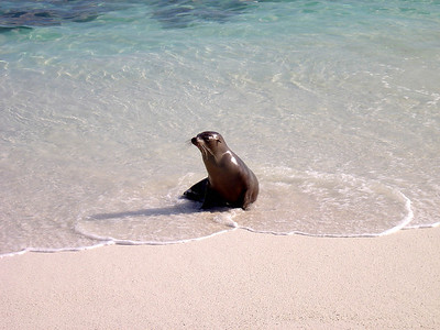 Gardner Bay on Espanola Island (sea lion taking a rest on the beach)