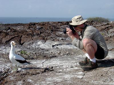 Nazca boobie posing for Craig (Genevosa Island)