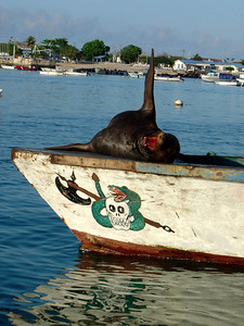 San Cristobal Island (hello from a sea lion)