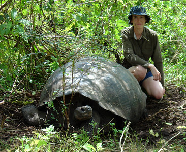 Fully grown tortoises can weigh over 300 kilograms (661 lb) and measure 1.2 meters (4 ft) long. They are very long-lived with a life expectancy in the wild estimated to be over 150 years. They are herbivorous animals with a diet comprising cactus, grasses, leaves, vines, and fruit. http://en.wikipedia.org/wiki/Gal%C3%A1pagos_tortoise