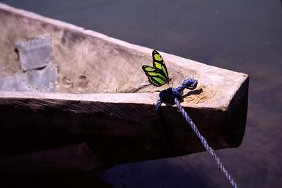Butterfly on canoe (2004)