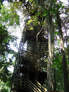 Tree house (close to Sacha Lodge): an ideal place to observe birds & other wildlife.  www.sachalodge.com