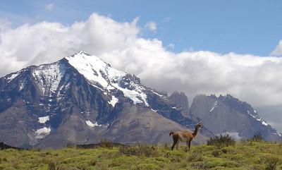 06 guanaco posing
