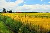 Field & sky 7-14 kk_019p