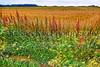 Field & sky 7-14 kk_018p_F