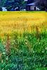 Field & sky 7-14 kk_024p_Fms