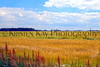 Field & sky 7-14 kk_029pms