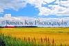 Field & sky 7-14 kk_031p_F