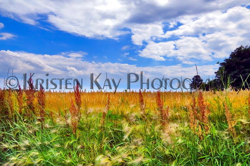 Field & sky 7-14 kk_011pms
