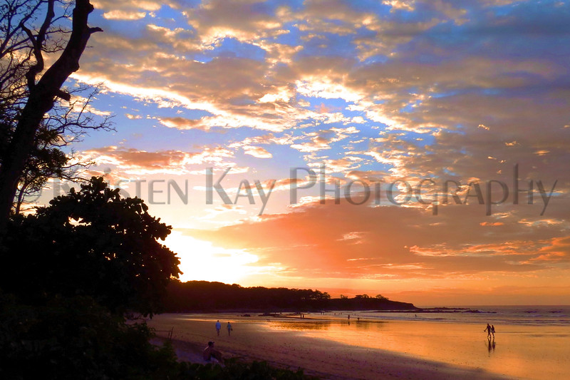 sunset tree_005