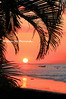 sunset Palms CR_004_F