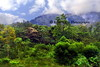 jungle from zip base_010p