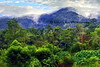 jungle from zip base_005p_F3d