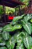 TS Leaf lounger_001