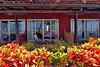 Diria resort GM_001p