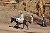 Donkeys-Abydos_006
