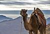 EGP_0461 Mount Sinai_