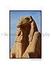 Ave of Rams-Karnak_009_Fwht