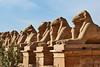 Ave of Rams-Karnak_004_F