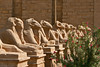 Ave of Rams-Karnak_011