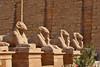 Ave of Rams-Karnak_002