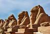 Ave of Rams-Karnak_007_F