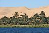 Nile Lush Shore_007