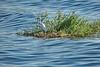 Nile Lush Shore_036