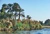 Nile Lush Shore_035