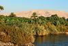 Nile Lush Shore_010