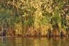 Nile Lush Shore_005