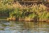 Nile Lush Shore_003