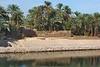Nile Lush Shore_024