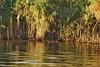 Nile Lush Shore_004