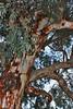 St catherine OldTrees_003